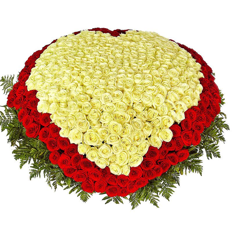 живые розы картинки букеты 1001 роза стены